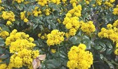 Krzewy do cienia. Jakie krzewy cieniolubne wybrać do ogrodu?