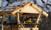 Jak zrobić karmnik dla ptaków? Podpowiadamy!
