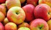 Zimowe odmiany jabłoni - przegląd i charakterystyka najlepszych
