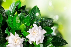 Cieniolubne Kwiaty Doniczkowe