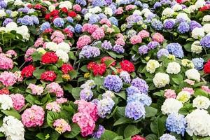 Kwiaty doniczkowe które lubią słońce