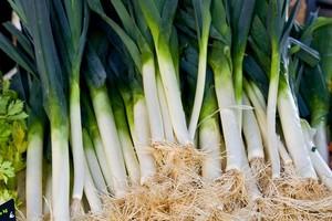 Por - uprawa, najlepsze odmiany i wartości odżywcze