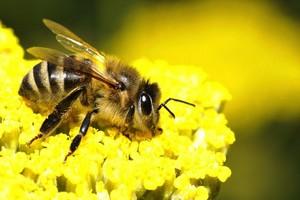 Zapylanie kwiatów i ogród sprzyjający owadom zapylającym