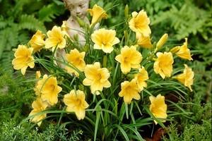 Najłatwiejsze w uprawie byliny wiosny, lata i jesieni, czyli sadzonki liliowców